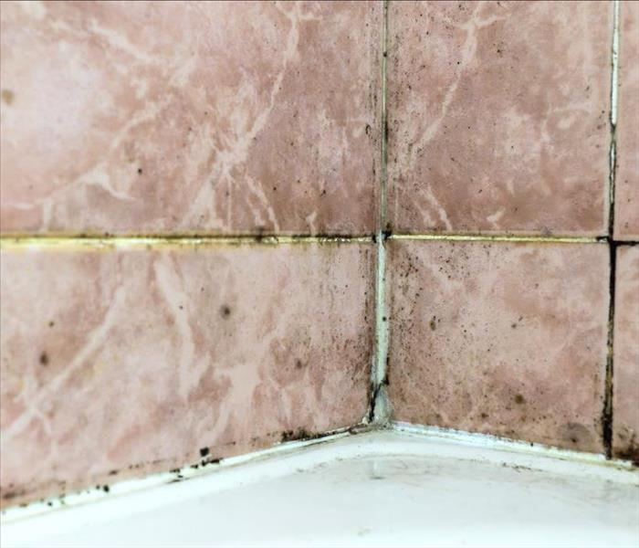 Black mold growing on shower grouted joints tile in bathroom wall corner